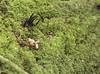 Xylaria among the moss