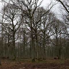 En forêt de Creuse