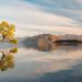 The Lonely Tree, Wanaka by richjjones