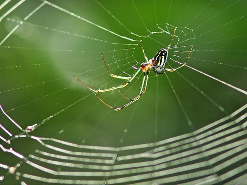 Garden Spider 2-20151218