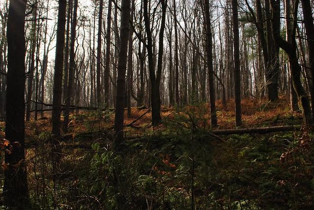 Black Moshannon State Park