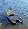 A Heron On A Sunken Boat On The Thames In Richmond - London.