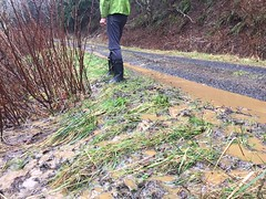 Stormwater saturating the forest road, likely to result in road damage