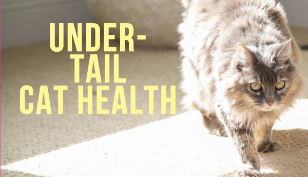 under-tail-cat-health
