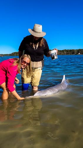 Kathys Delphinfütterung in Tin Can Bay
