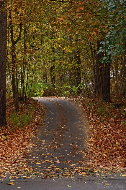 autumn_roads_14