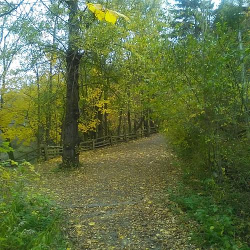 Crossroads #toronto #riverdaleparkwest #riverdalepark #autumn