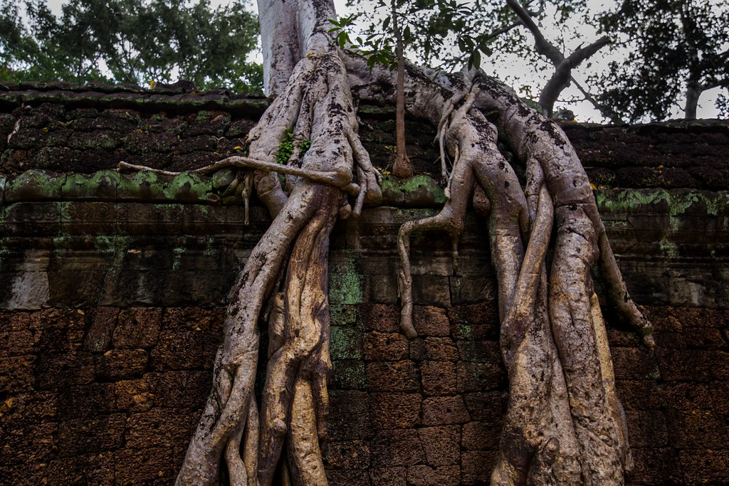 Ta Prohm Angkor-2862