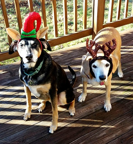2 Senior Dogs Christmas 2015 - Lapdog Creations
