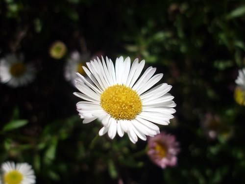 Autor: florenciab.luna