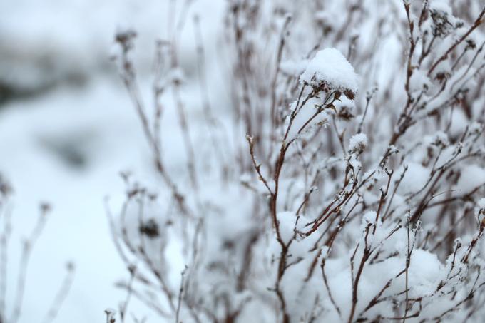 talvi 087
