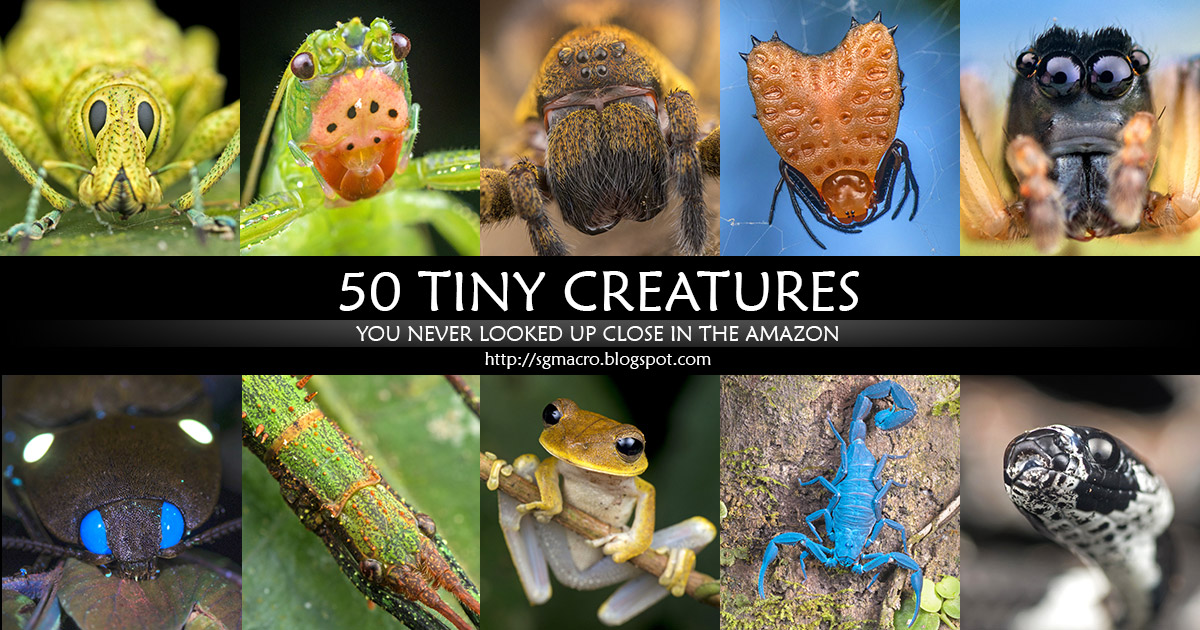 50 Tiny Creatures You Never Looked Up Close In the Amazon