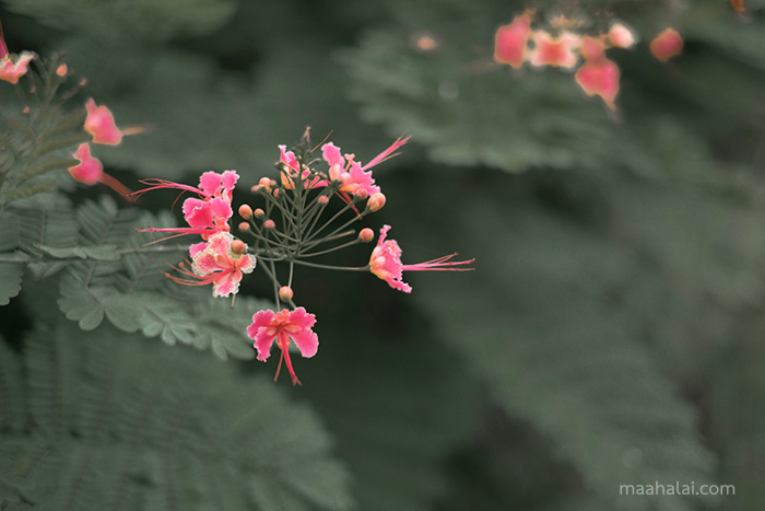 Lightroom Flower Tone