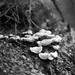 Barton Creek Greenbelt Fungus
