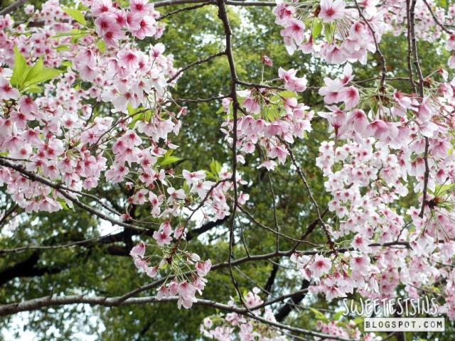 japan tokyo trip ueno park 21