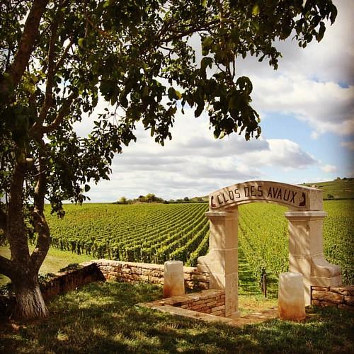 Wandelingetje tussen de wijngaarden van Beaune, poort van Bourgogne. #hiking #beautifulfrance #genieten #vineyard