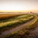 Corn Crop in Autumn Morning by Bradley Simonsen