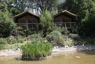 Wildebeest Camp.  Nairobi, Kenya.
