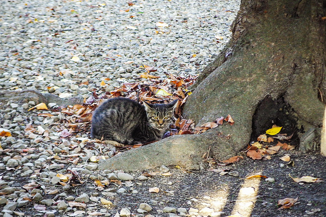 Today's Cat@2015-10-03