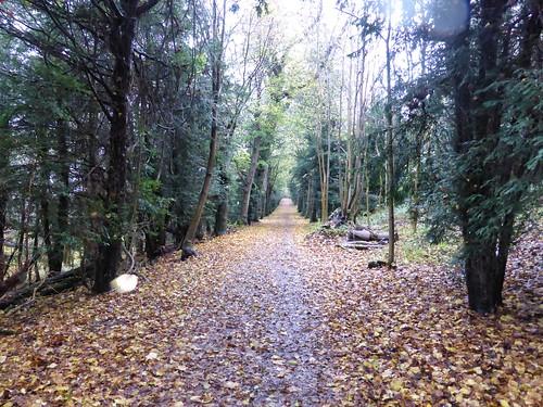 Wendover Woodland