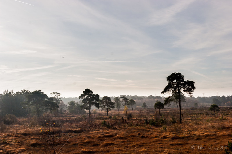 A cold start on Upton Heath