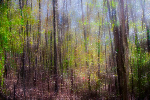 november autumn trees fall forest woods alabama blues browns greens yellows shrubs greys holdouts