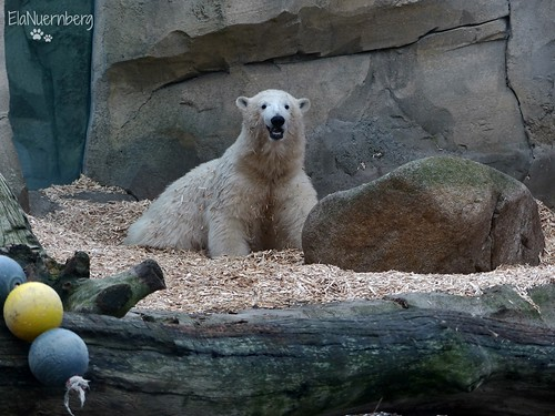 Valeska - Lili - Lloyd - Eisbären - Zoo am Meer Bremerhaven
