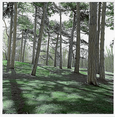 Trees - Hand tinted