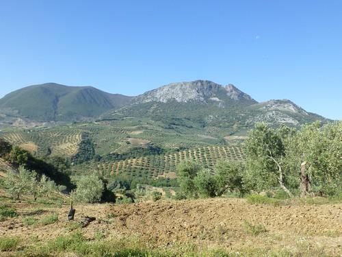 Cortijo Rosario: olive grove under El Peñón mountains