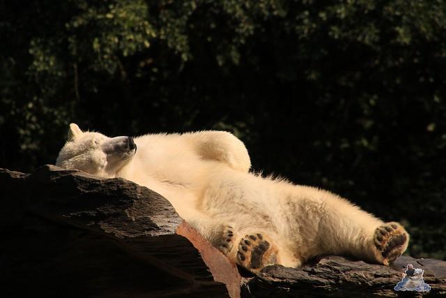 Tierpark Berlin 23.08.2015  013