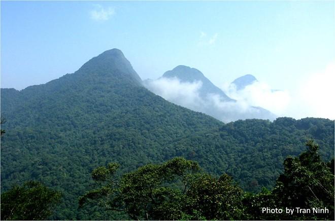 Tam Đảo là địa điểm tuyệt vời cho các chuyến nghỉ dưỡng tìm lại sự thư thái cho tâm hồn. Đặc sản không nên bỏ qua của Tam Đảo là các món nướng, ngọn su su xào. Ảnh: Trần Ninh.