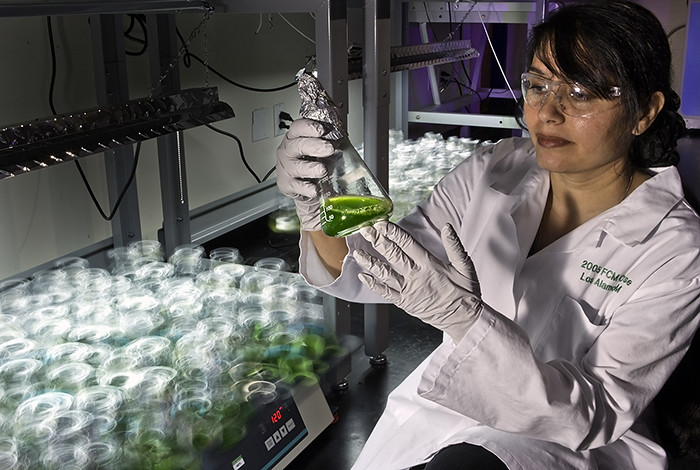 Picture of the Week: Growing a greener future with algal biofuels