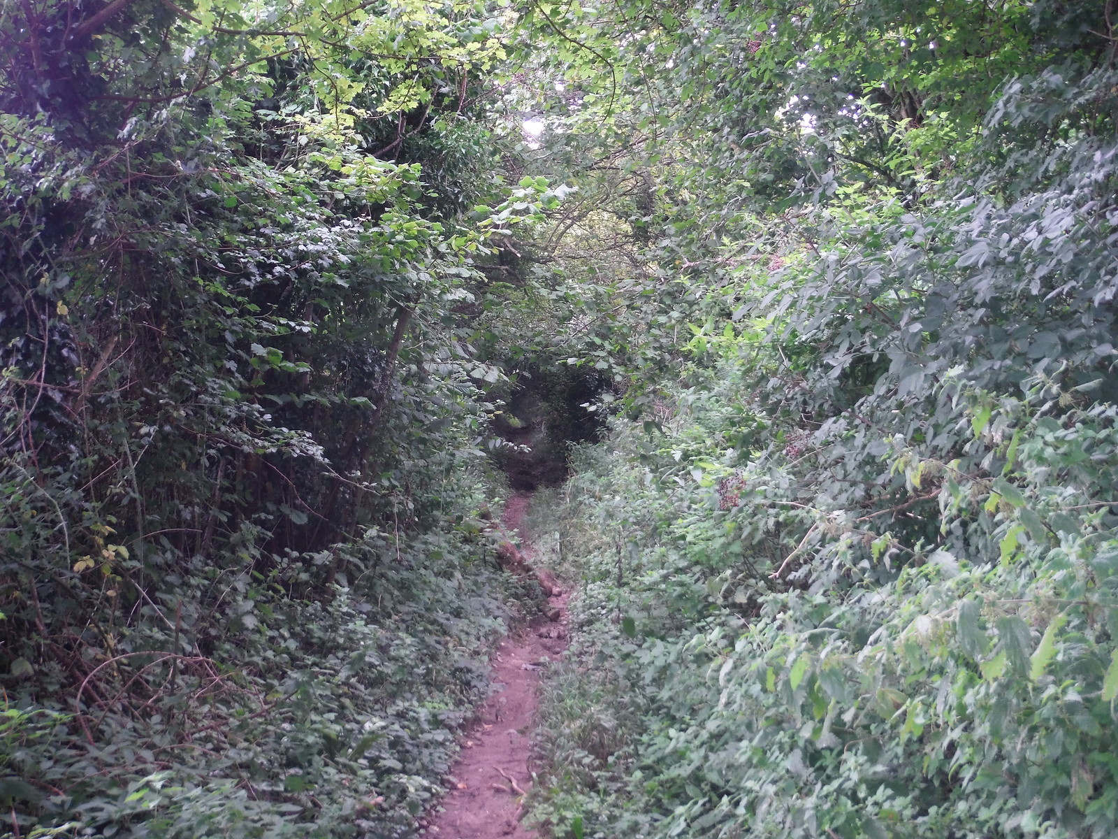 Ancient Holloway up to Castle Ditches Iron Age Hillfort SWC Walk 250 Tisbury Circular via Alvediston