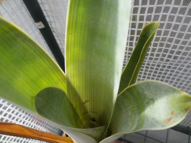 Plantas.werds.2012-2013 - Página 8 21285116171_9033e01609_z