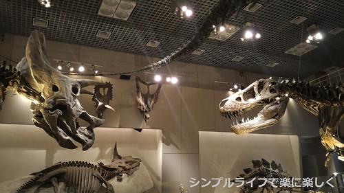 東京3日目、博物館・トリケラトプスとティラノ