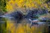 Crossing Rush Creek by Brian Edward Anderson