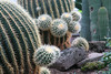 A Prickly Situation... by peterkelly