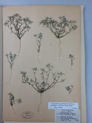 Herbarium specimens