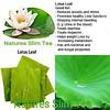 Lotus Leaf Tea by Natures SlimTea