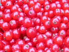 shrub(0.0), pink peppercorn(0.0), acerola(0.0), flower(0.0), plant(0.0), raspberry(0.0), zante currant(0.0), berry(1.0), frutti di bosco(1.0), produce(1.0), fruit(1.0), food(1.0), cranberry(1.0), lingonberry(1.0),