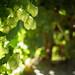 Day 25: green by louisahennessysuɹoɥƃuıʞıʌ