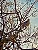 DSCN3072 No conozco música más bella que el trino de un pájaro by Aprehendiz-Ana Lía