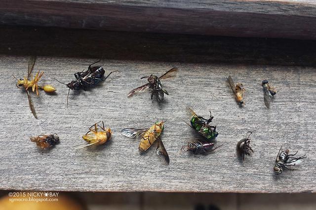 Room bugs