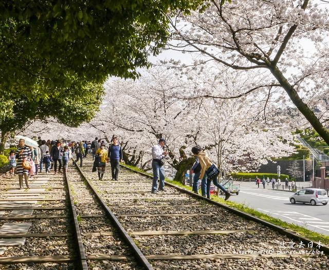 0402D8京都醍醐寺-1160554