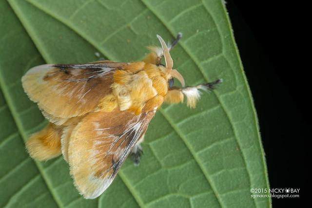 Moth - DSC_8450