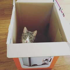 New bin that will hopefully be more resistant to cat raids... This cat just happy for a new box #catsofinstagram #naughtykitties #binraiders #nomore