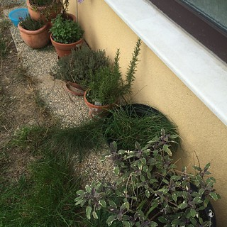 Kräuter Testbestände im Garten #gartenfreuden #kräuter #herbs
