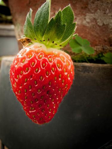 074 strawberry