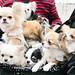 Small photo of Pram of puppies