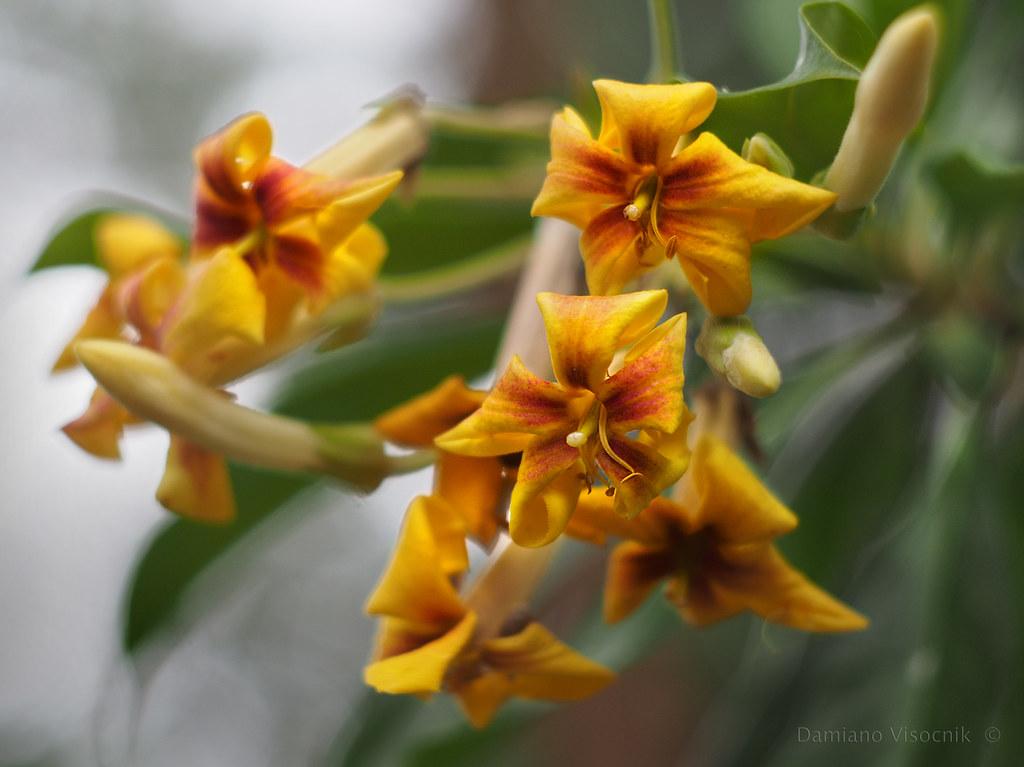 Tree flower_4